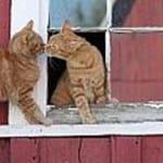 Barn Cats 0212