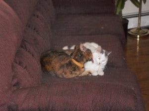 Talia and Tiny