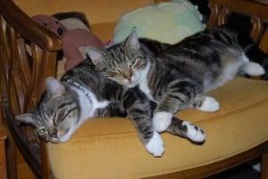Dexter & Sylvester