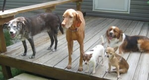 Pogo, (friend Belle), Lupie, Tawnie and Cubby