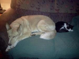 Sasha & Murphy
