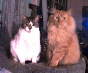 Domi & Julius