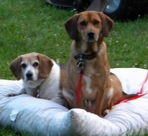 Rocco & Jed