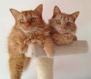 Sammy & Charlie