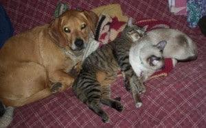 Monte & Friends