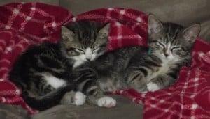 Fern & Phoebe
