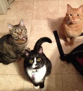 Greta, Bella and Piper