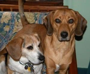 Jed & Rocco
