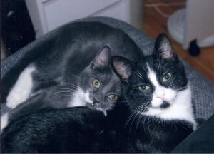 Oreo & Oliver