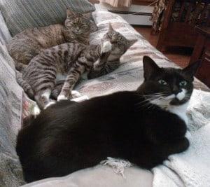 Luna, Tarzan & Asha