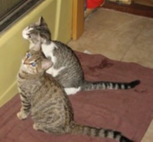 Alvin & Louisa