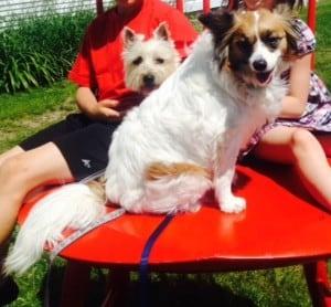 Daisy & Ginger