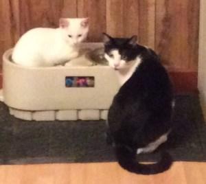 Gus & Snowpuff