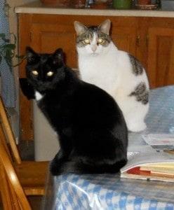 Kitkat and Beau