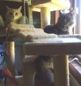 Sunny and Smokey 0515