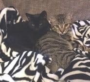 Ziggy and Piper 1015