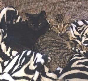Ziggy and Piper