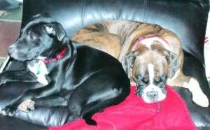 Pearl & Roxie