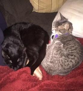 Molly & Lola