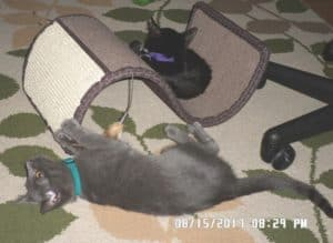 Cookie & Sassy