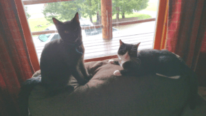 Leo and Oreo