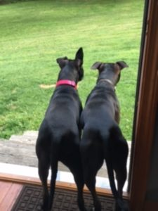 Molly & Max