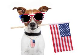 Memorial day dog. Celebrate pet safety this