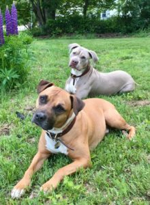 Milo and Friend