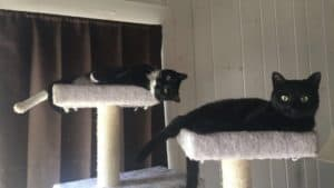 Oakley and Milo